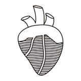 Coeur de découpe avec des valves et des veines illustration stock