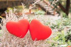 Coeur de deux rouges sur des fleurs d'herbe Photos stock