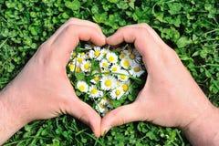 Coeur de fleur dans l'herbe Photographie stock