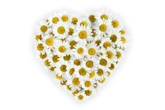 Coeur de fleur de marguerites sur le fond blanc Photos stock