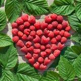 Coeur de framboise rouge avec les lames vertes Image libre de droits