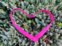 Coeur de genévrier Images stock