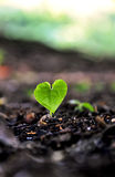 Coeur de germination Photo libre de droits