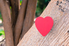 Coeur de l'amour dans la Saint-Valentin sur l'arbre Photo stock