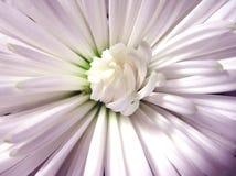 Coeur de la fleur Photos libres de droits