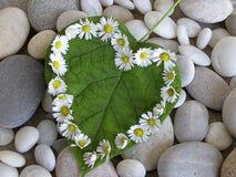 Coeur de marguerite Image libre de droits