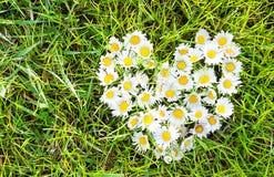 Coeur de marguerites sur l'herbe verte Photos libres de droits