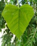 Coeur de nature photographie stock libre de droits