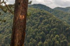 Coeur de nature photographie stock