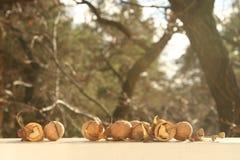 Coeur de noix Photos stock