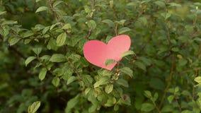 Coeur de papier tombant d'un buisson banque de vidéos