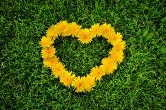 Coeur de pissenlit sur une herbe Photographie stock