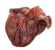 Coeur de porcs Images stock