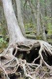 Coeur de racine d'arbre Images stock