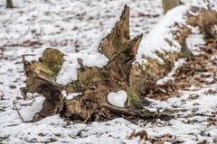 Coeur de se situer en céramique dans un arbre Photo libre de droits