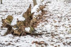 Coeur de se situer en céramique dans un arbre Photos stock