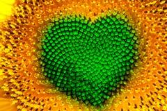 Coeur de tournesol Image libre de droits
