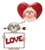 Coeur de valentine de maquette avec le chien mignon Photographie stock libre de droits