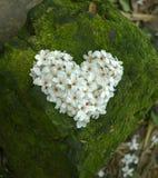 Coeur de vintage des fleurs Photographie stock libre de droits