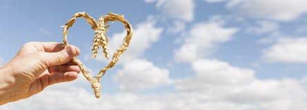 Coeur des ?pis de bl? dans une main en ciel bleu photographie stock libre de droits