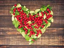 Coeur des baies rouges juteuses et des feuilles vertes de l'airelle rouge Photographie stock libre de droits