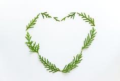 Coeur des branches de sapin sur le fond blanc Photographie stock