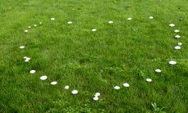 Coeur des champignons image stock