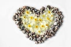 Coeur des coquillages et des fleurs Photo libre de droits