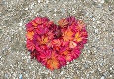 Coeur des feuilles rouges et d'orange Photographie stock libre de droits