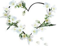 Coeur des fleurs de jasmin d'isolement sur le blanc Photos libres de droits