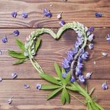 Coeur des fleurs de loup Image libre de droits