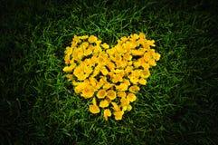 Coeur des fleurs jaunes Photos stock