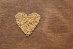 Coeur des grains de blé Image libre de droits