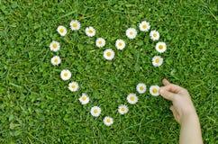 Coeur des marguerites dans l'herbe Images libres de droits