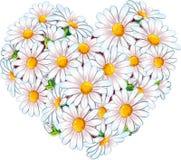 Coeur des marguerites en fleur Photo stock