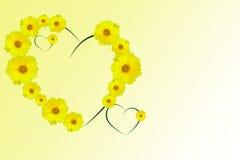 Coeur des marguerites jaunes Photographie stock libre de droits