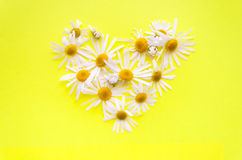 Coeur des marguerites sur un fond jaune Photo stock
