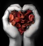 Coeur des pétales Image libre de droits