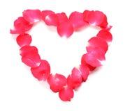Coeur des pétales de l'isolat de roses rouges sur le blanc de fond Images stock