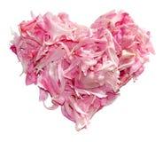 Coeur des pétales de pivoine d'isolement sur le blanc Photo libre de droits