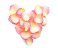 Coeur des pétales de rose roses sur le fond blanc Photo libre de droits