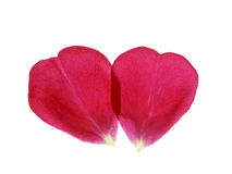 Coeur des pétales de rose rouges Photographie stock libre de droits