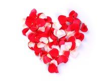 Coeur des pétales roses Image stock