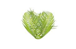 Coeur des palmettes d'isolement sur le fond blanc - environmenta Photos stock