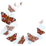 Coeur des papillons sur le fond blanc Photo stock