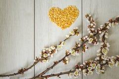 Coeur des pois et des branches fleuries d'abricot photographie stock