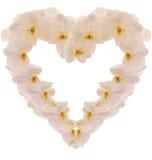 Coeur effectué à partir de l'orchidea de photo Photographie stock libre de droits