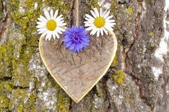 Coeur en bois sur l'arbre Image libre de droits