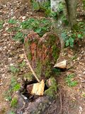 Coeur en bois sur le plancher de forêt Images stock