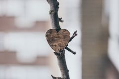 Coeur en bois sur un pommier Images stock
